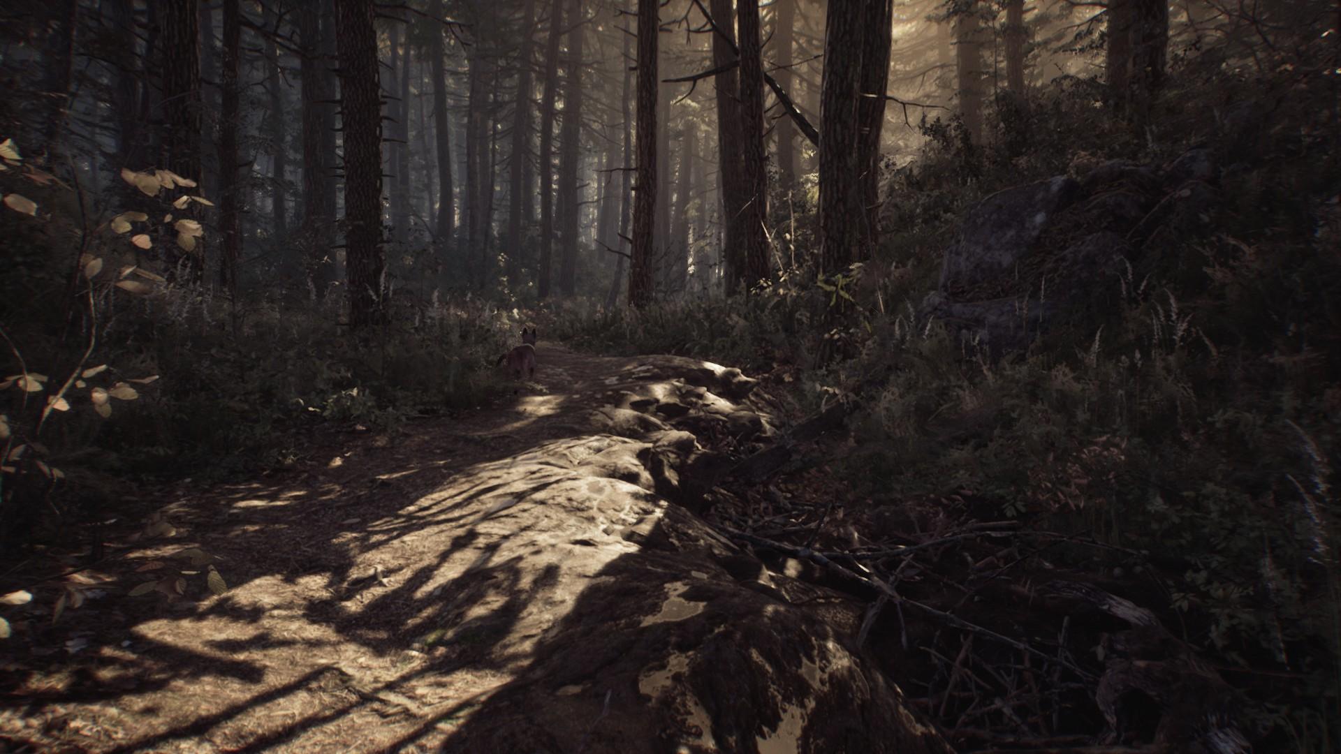 Un chien courant dans une forêt.
