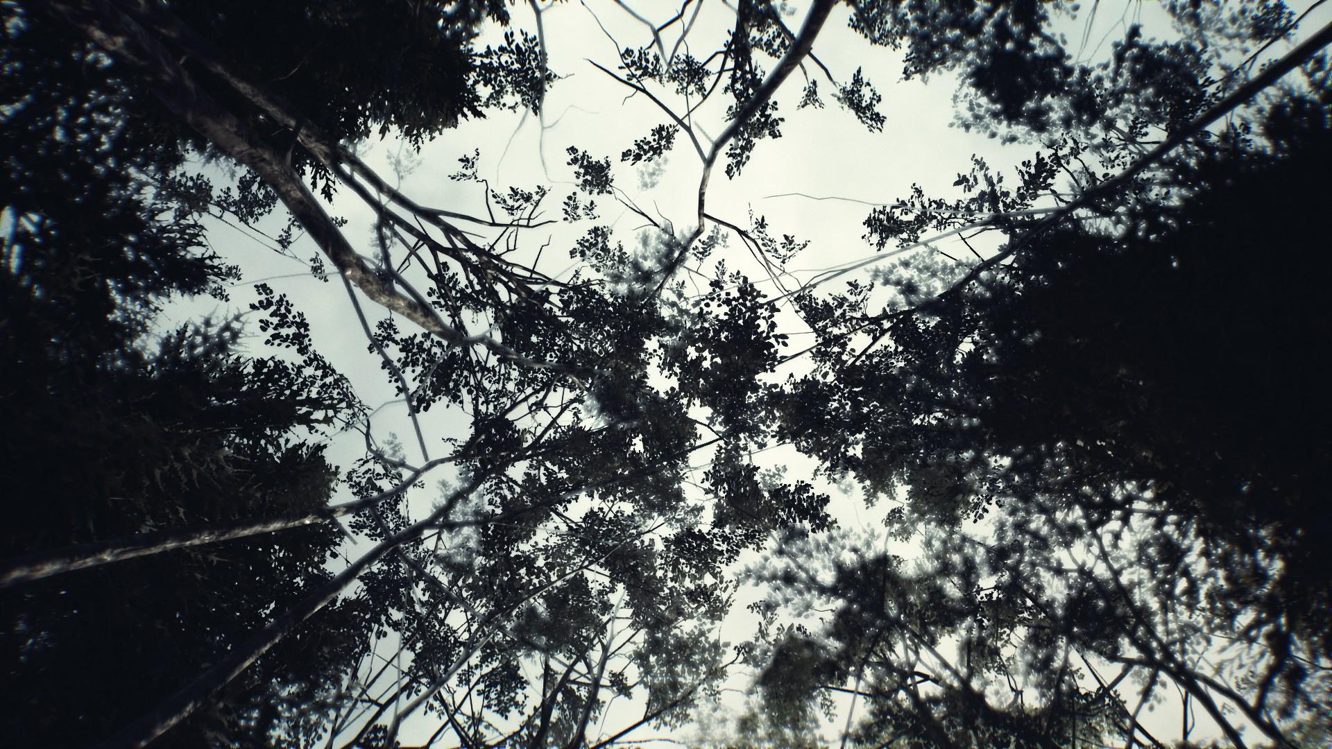 La cime des arbres vu d'en bas.