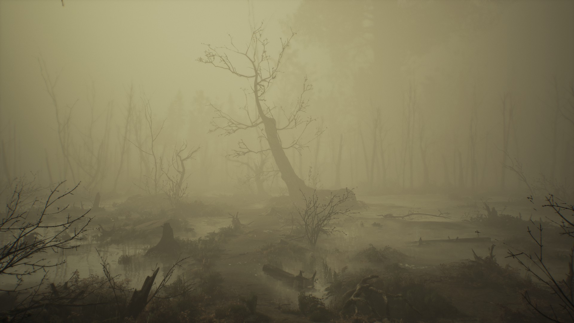 Un arbre mort dans la brume.