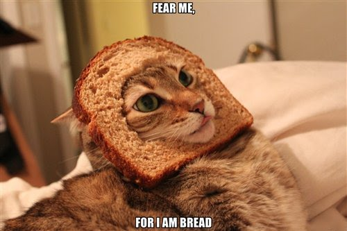 Fear-Me-For-I-Am-Bread-Cat