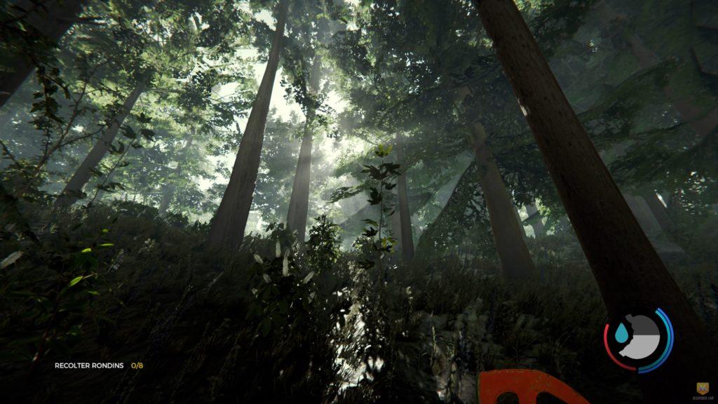 La forêt angoissante du jeu The Forest.
